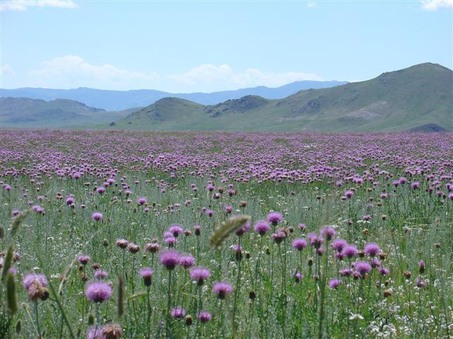 Mongolia Hiking & Trekking Holidays