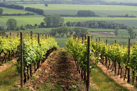 Walla Walla Winery Tour