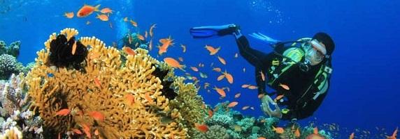 Cote d'Azur Scuba Diving Holidays In France